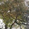 08-24-16 Dayton 04 trees