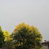 08-24-16 Dayton 01 trees