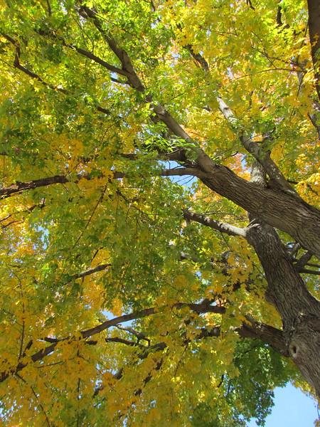 11-01-16 Dayton 55 leaves