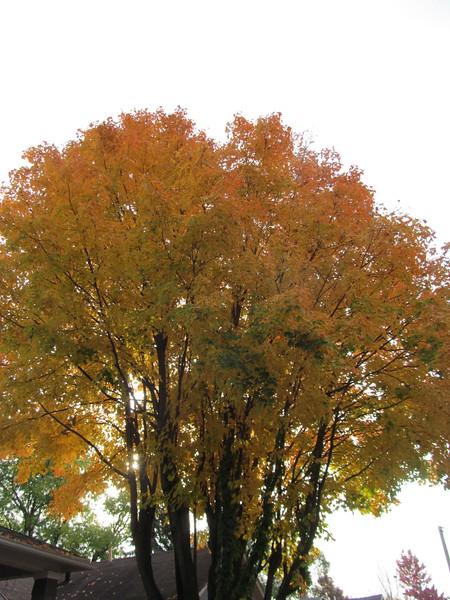 11-01-16 Dayton 12 leaves
