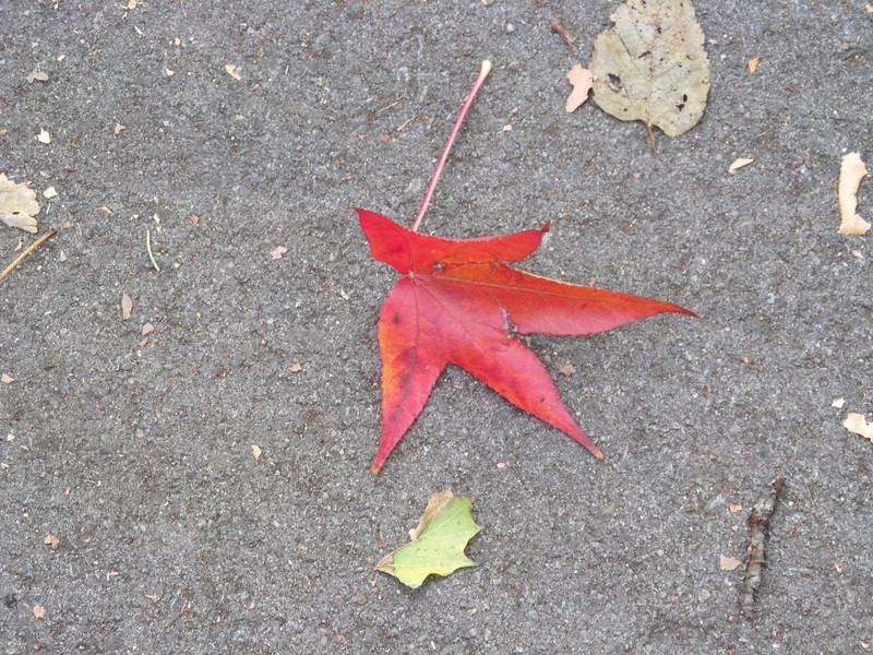 11-01-16 Dayton 11 leaves