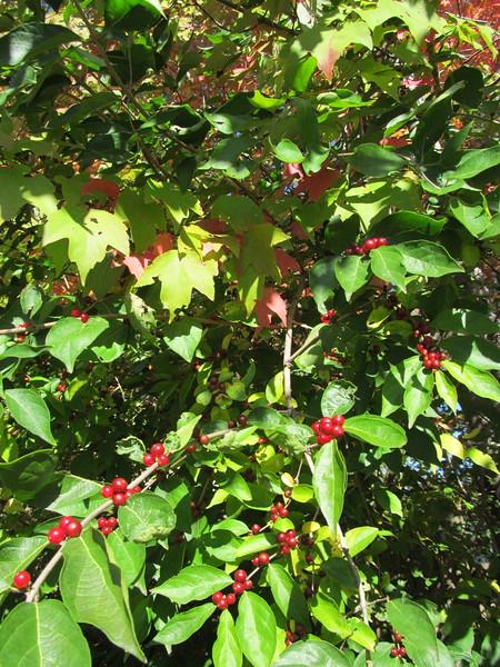 10-23-16 Dayton 28 leaves