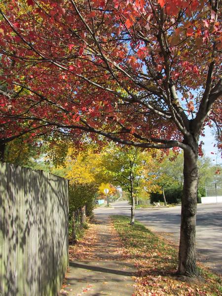 11-01-16 Dayton 38 leaves