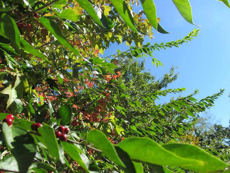 10-23-16 Dayton 27 leaves
