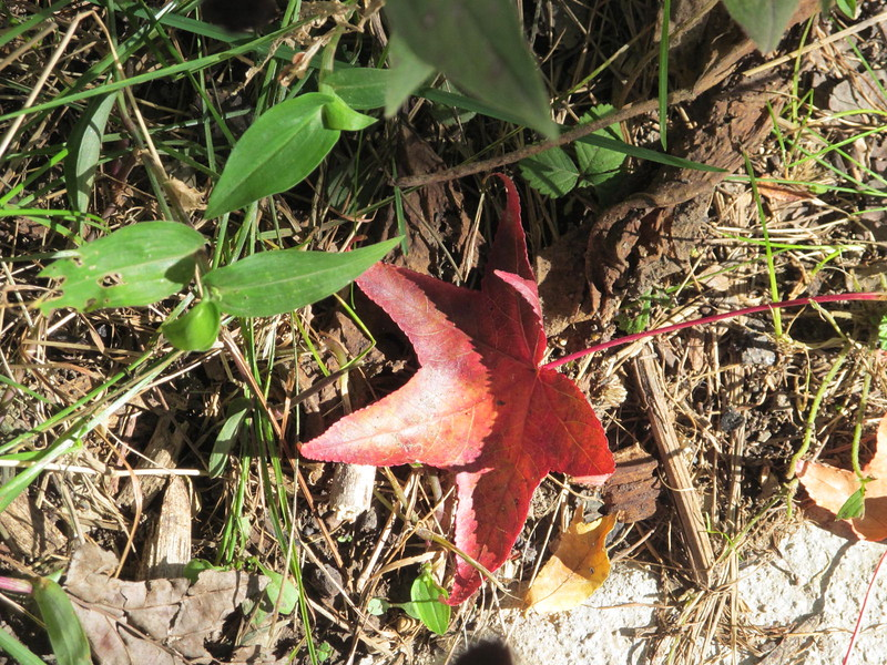 10-23-16 Dayton 03 leaf