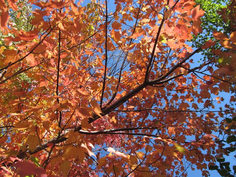 10-23-16 Dayton 10 leaves
