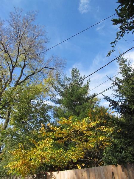 11-01-16 Dayton 22 leaves