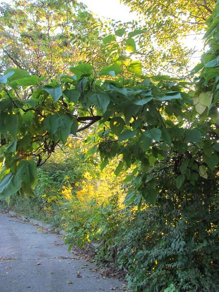 09-25-16 Dayton 03 sun and leaves