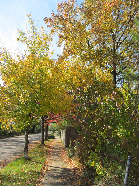 11-01-16 Dayton 42 leaves