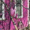 04-01-16 Dayton 05 magnolia