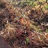 02-05-16 Dayton 01 daffodils