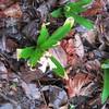 03-10-16 Dayton 01 hyacinth