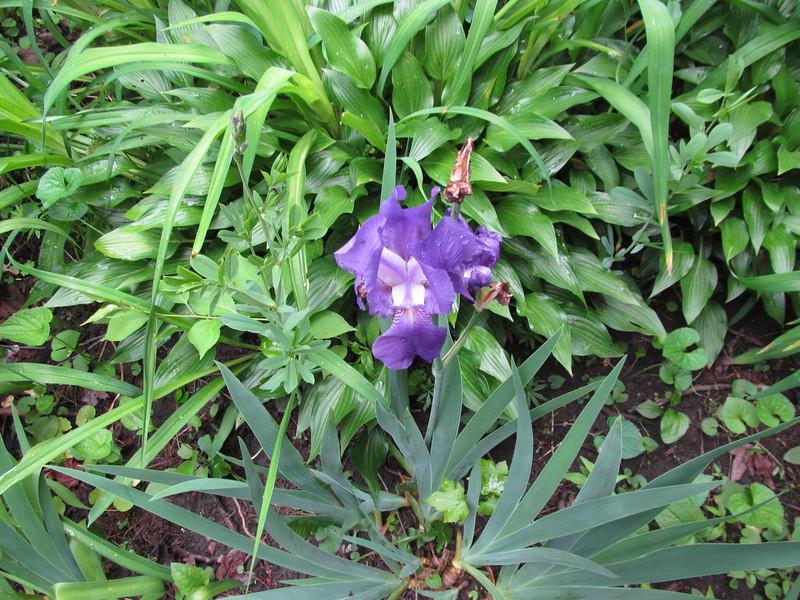 05-21-16 Dayton 01 iris
