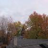 11-11-16 Dayton 02 leaves