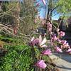 04-01-16 Dayton 02 magnolia