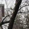 03-10-16 Dayton 06 rain drops
