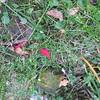 11-01-16 Dayton 26 leaves