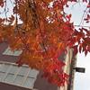 11-01-16 Dayton 06 leaves