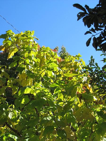 10-23-16 Dayton 02 leaves