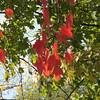 11-01-16 Dayton 48 leaves