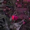 04-11-16 Dayton 43 magnolia