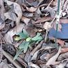 02-28-16 Dayton 01 daffodil