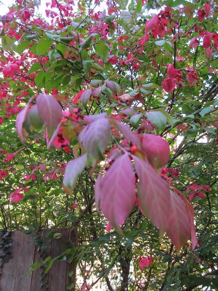 11-01-16 Dayton 23 leaves