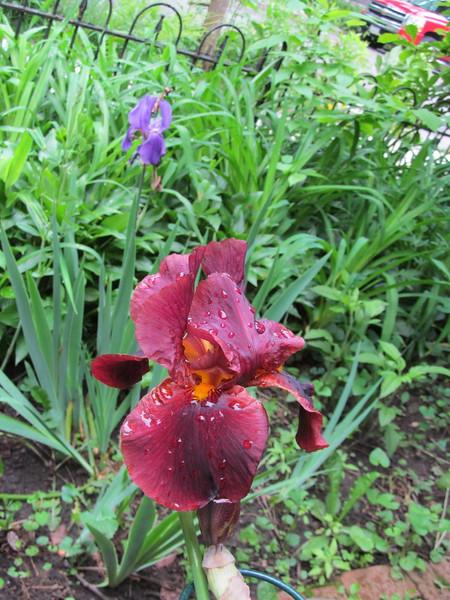 05-21-16 Dayton 10 iris