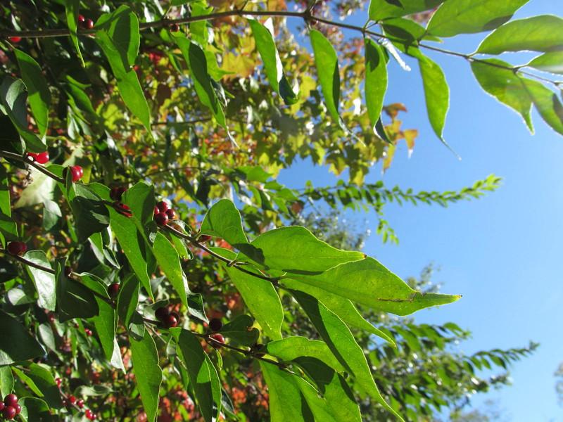 10-23-16 Dayton 26 leaves