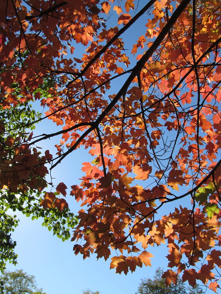 10-23-16 Dayton 17 leaves