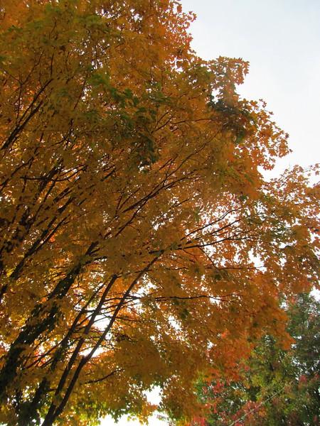 11-01-16 Dayton 13 leaves