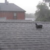 08-28-16 Dayton 04 rain, hail