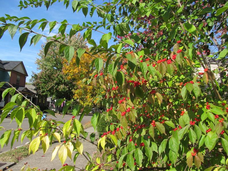 11-01-16 Dayton 34 leaves