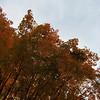 11-01-16 Dayton 14 leaves