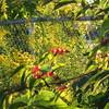 09-25-16 Dayton 04 sun and leaves