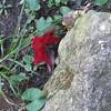 10-23-16 Dayton 01 leaf