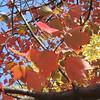 11-01-16 Dayton 47 leaves