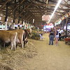I always tour the farm barns during my county fair visits. I have been in hundreds of farm barns!