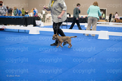 pups2 (17 of 783)