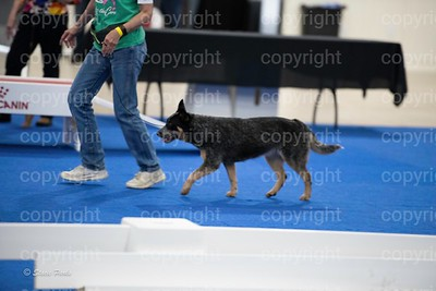 pups4 (286 of 435)