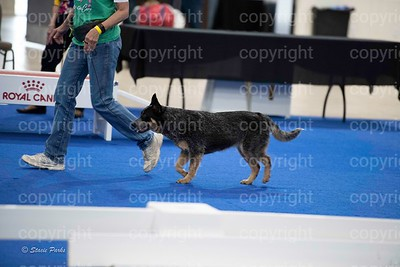 pups4 (287 of 435)