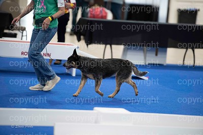 pups4 (288 of 435)