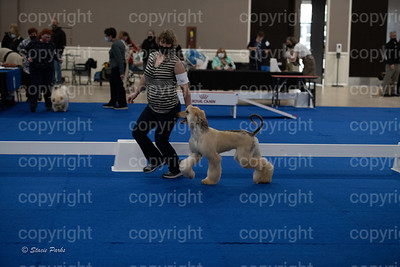 pups2 (84 of 783)