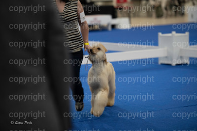 pups2 (41 of 783)