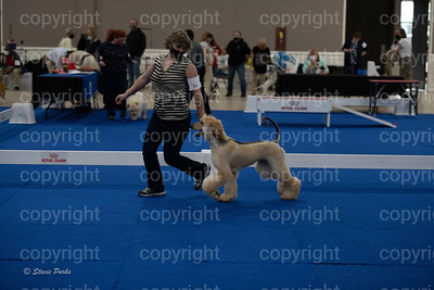 pups2 (86 of 783)