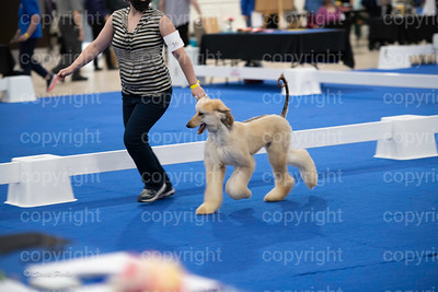pups2 (27 of 783)