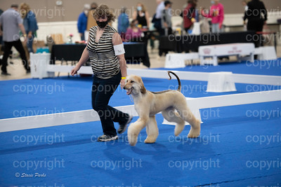 pups2 (24 of 783)
