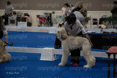 pups2 (78 of 783)