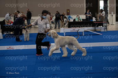 pups2 (95 of 783)