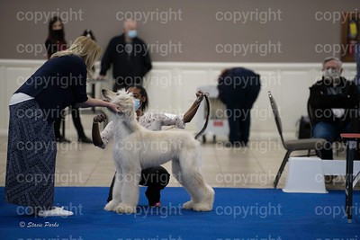 pups4 (258 of 435)